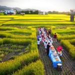 幸福果食 還原農村價值