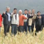 「喜願共合國」 用小麥種出台灣的回憶