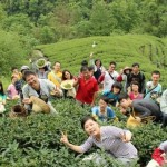 台灣藍鵲茶 打造坪林生態村